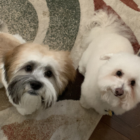 My2Dogs